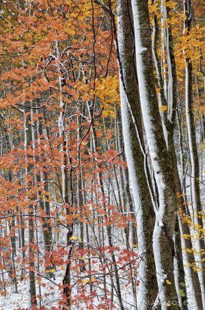 fall--12-c10.jpg