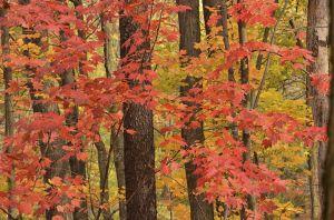 fall--15.jpg