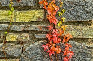 fall--16-c32.jpg