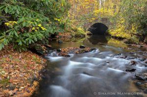 fall--2-2.jpg