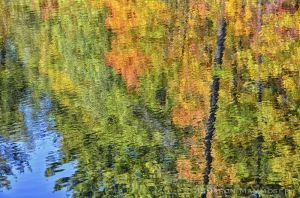 fall--2-c92.jpg