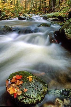 fall--2.jpg
