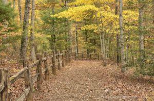 fall--3-2.jpg
