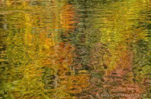 fall--3-c63.jpg
