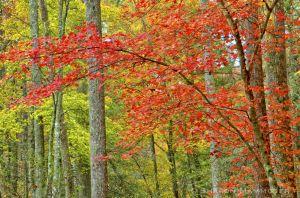 fall--4-c50.jpg