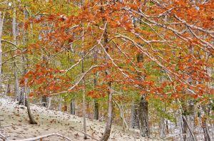 fall--8-2.jpg