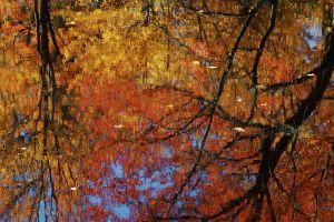 fall--8.jpg