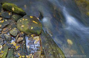 fall--c39.jpg