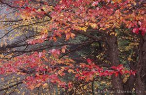 fall-005.jpg