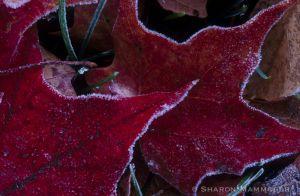 fall-018.jpg