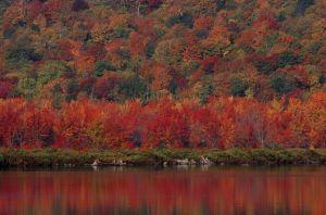 fall-027.jpg