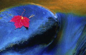 fall-2.jpg