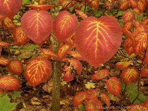 fall-2217.jpg