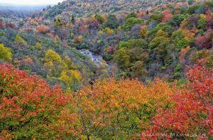 fall2--2-c23.jpg