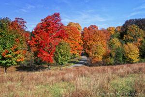 fall2--3.jpg