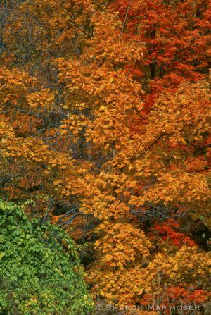 fall2--4-c16.jpg
