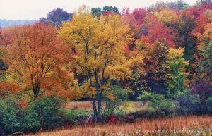 fall2--5.jpg