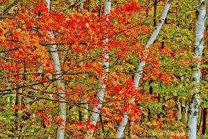 fall2--6.jpg