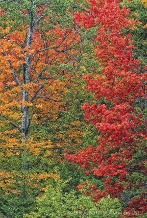 fall2--7.jpg