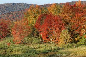 fall2--8.jpg