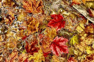 fall2-.jpg