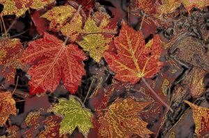 fall2-2.jpg