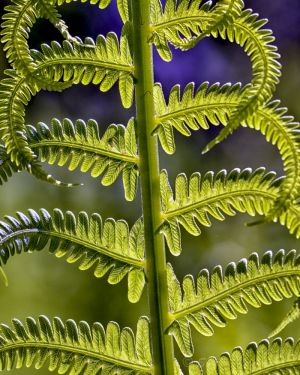 Beauty of a fern frond