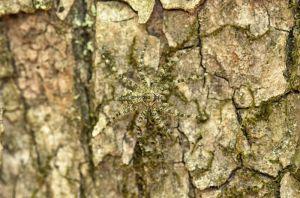 Hiding on a tree