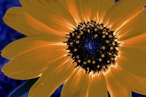 beauty3--4.jpg
