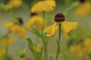 flowers--2.jpg