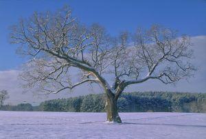 treee--3.jpg