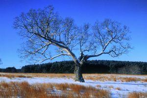 treee--4.jpg