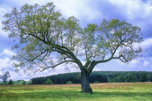 treee--5.jpg
