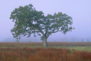 treee--6.jpg