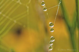 Water drops on silk