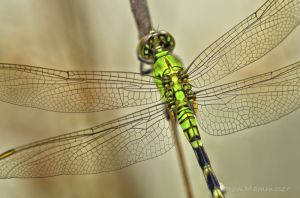 A lovely dragonfly