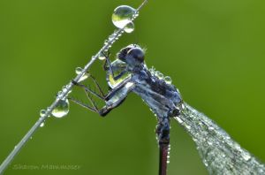A damselfly in the grass