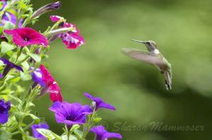 Hummingbirds make me smile