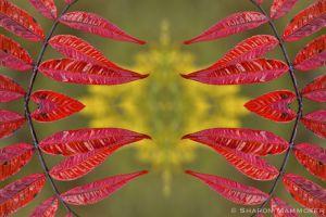 kaleidoscope19-2-4.jpg