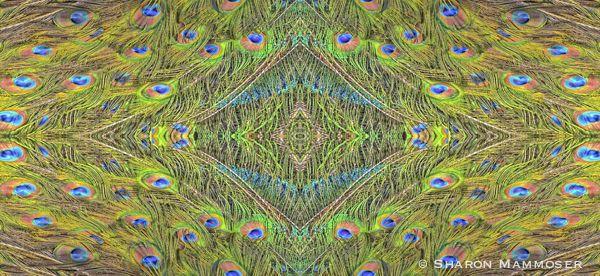 peacockkale-.jpg