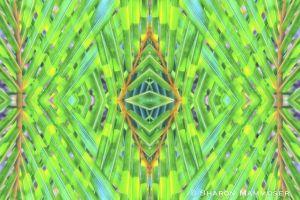 peacockkale-2.jpg