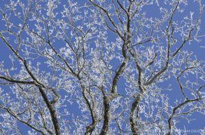 Lovely treetops