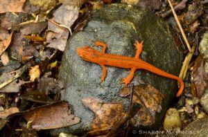 Bright orange warns predators