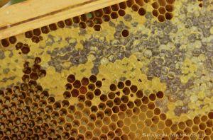 Old honeycomb