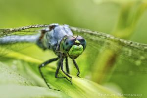 Big Eyes mean wonderful sense of sight
