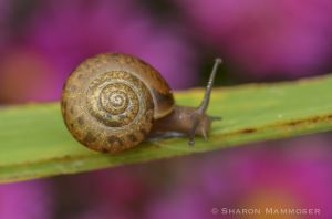 Snails are cool too!