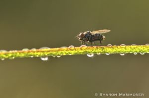 A fly rests on grass