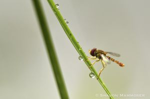A fly in the grass