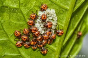 Bugs hatching from their eggs.