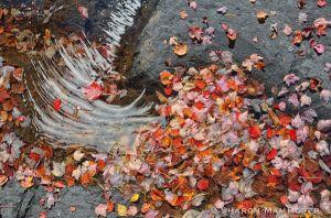 More water art